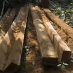 Members of local environmental NGO arrested for illegal logging