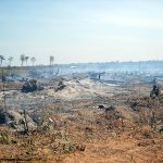 PLCN urges ministries to protect the forests
