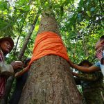 Millions donated for Prey Lang conservation