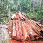 Forest activists decry illegal logging