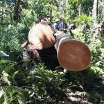 Loggers detained in wildlife sanctuary