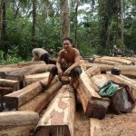 Danish App helps fight illegal logging in Cambodia