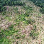 NGO reports massive forest clearing in Prey Lang area