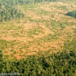 Gov't, USAID Criticized for Inaction Over Severe Forest Loss at Prey Lang Sanctuary
