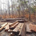 'They never intended to conserve it': Outcry as loggers gut Cambodian reserve