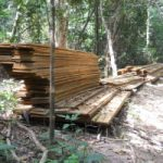 Activist ban 'spurs forest crimes'